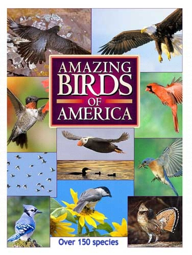 Maslowski Productions Amazing Birds Of America DVD