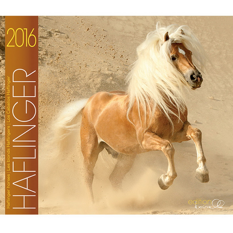 gabriele boiselle hggb161 calendar haflinger. Black Bedroom Furniture Sets. Home Design Ideas