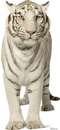 Advanced Graphics 1481 White Tiger - 52