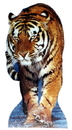 Advanced Graphics 230 Tiger- 51