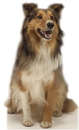 Advanced Graphics 624 Collie Dog- 36