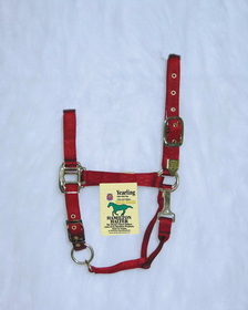 Hamilton Halter Adj. Chin W/Snap Red / Yearling - 1Das Yrrd