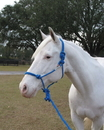 Hamilton Adult Horse Rope Halter With Lead - Blue - Average Horse