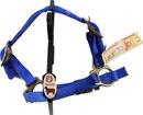 Hamilton Sheep Halter With Adjustable Strap - Blue - 3/4 Inch