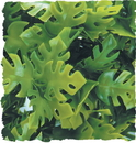 Zoo Med Natural Bush Amazonian Phyllo Plant - Green - Small/14 Inch