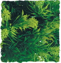 Zoo Med Natural Bush Malaysian Fern Plant - Green - Small/14 Inch