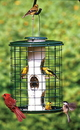 Audubon/Woodlink Avian Series Mixed Seed Cage Bird Feeder - Green - 2 Pound Cap