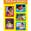 Carson Dellosa CD-114057 Chartlets The Five Senses
