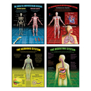 Mcdonald Publishing MC-P149 The Human Body Teaching Poster Set