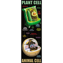 Mcdonald Publishing MC-V1632 Plant And Animal Cells