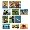 North Star Teacher Resource NST9086 Amusing Animals Language Cards