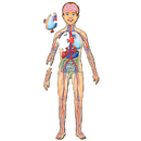 Platapilla USA PPAFL076 Human Body With Organs Floor Puzzle