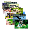 Stages Learning Materials SLM151 Wild Animal Poster Set Set Of 10