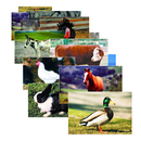 Stages Learning Materials SLM152 Farm Animal Poster Set Set Of 10