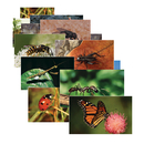 Stages Learning Materials SLM158 Insects 14 Poster Cards
