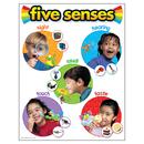 Trend Enterprises T-38051 Chart Five Senses 17 X 22 Gr Pk-2