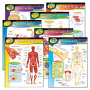 Trend Enterprises T-38913 Chart Pk The Human Body 7/Pk 17X22 Gr 5-8