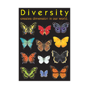 Trend Enterprises T-A67003 Poster Diversity Creates