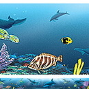 Teacher Created Resources TCR4375 Wy Ocean Life Border Trim 3