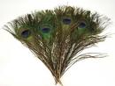AzureGreen RFPEA10 Peacock feather (pk of 10)