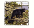 Counter Art CART12791 Black Bears Single Tumbled Tile Coaster
