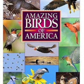 Maslowski Productions MAS2 Amazing Birds Of America DVD