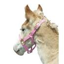 Intrepid International Foal Halter