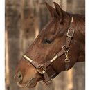 Intrepid International Two Toned Nylon and Leather Halter
