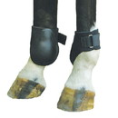 Intrepid International Fetlock Boot Neoprene - Black Large