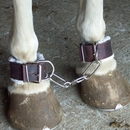 Intrepid International Fleece Lined Hobbles - Leather