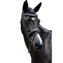 Intrepid International AEBD6146 Exselle Elite Fancy Stitched Padded Bridle X Brow Black