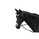 Intrepid International AEBD6153 Exselle Elite Raised Padded Fancy Stitched Bridle With X Brow Hv