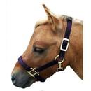 Intrepid International Miniature Horse Nylon Halter
