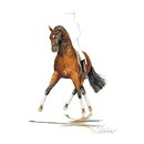 Haddington Green Equestrian Art Jan Kunster Horse Prints - San Diego (Dressage)