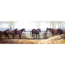 Malcom Coward Horse Prints - Waiting for Tea