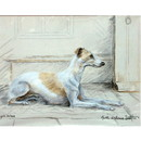 Haddington Green Equestrian Art Corinium Fine Art Dog Prints - Whippet