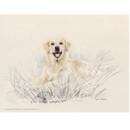 Corinium Fine Art Dog Prints - Golden