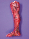 Morris Costumes 85-051 Skinned Right Leg