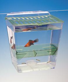 Penn-Plax Breed 'n' Show Plastic Tank