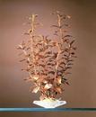 Penn-Plax Blooming Ludwigia (Red)  / Medium - Green