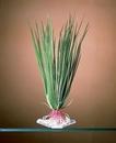 Penn-Plax Hair Grass / Large - Green