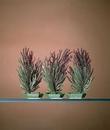 Penn-Plax Willow / 3 Pods