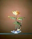 Penn-Plax Water Lily (White) / Medium - Green