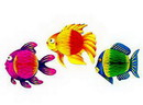 TROPICAL FISH 8IN.X6IN.