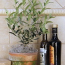 "Schubert Nursery 5"" Clay Olive Tree, 16"" tall, 6"" dia"
