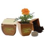 "Illini Bamboo Blossom Kit, Pad Printed, 3 1/2"" X 3 1/2"" X 3 1/2"", Price/piece"