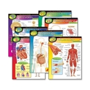 Trend The Human Body Learning Chart, Trend The Human Body Learning Chart