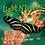 Light 'N Lively CD