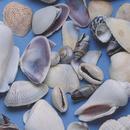 Shells Small 1lb. Bag
