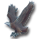 Siskiyou Buckle PN3024E Collector Pin - Free Form Eagle